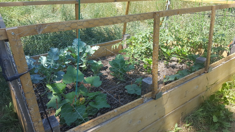 Square Foot Garden Ebel.jpg